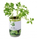 AROMATIC HERBS IN TIN CAN