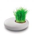 GRASS PLANT IN WHITE CERAMIC.